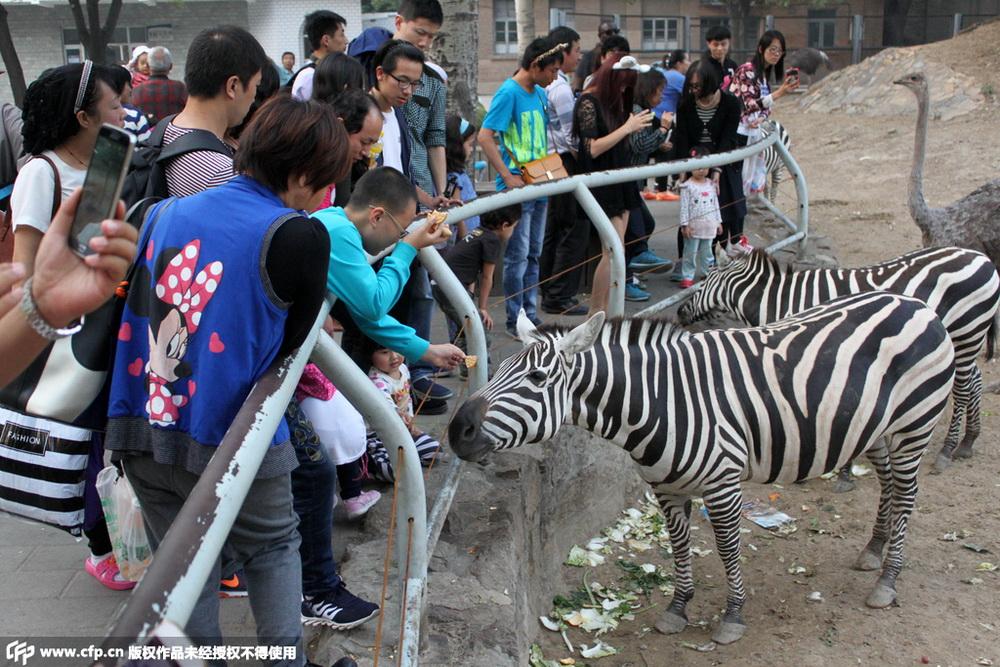 游客在动物园投喂动物